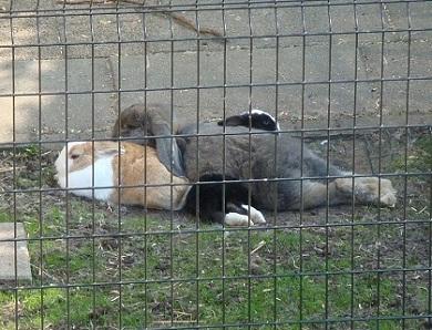 twee konijnen samen